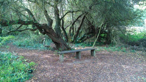 banco parque bosque salburua humedal parke vitoria hojas otoño benches