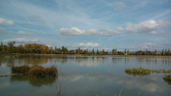 humedal agua parque