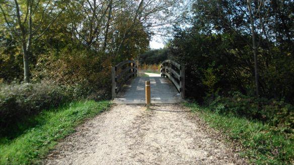 puente madera otoño bosque parque salburua camino way