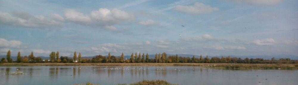 humedales salburua foto vitoria parque